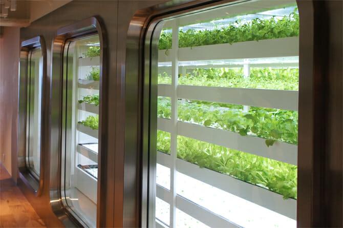 11F 地消地産をテーマにフリルレタスなどの水耕栽培を行う。ウィンドウの枠は、旧本店ステンレスビルの窓枠を利用