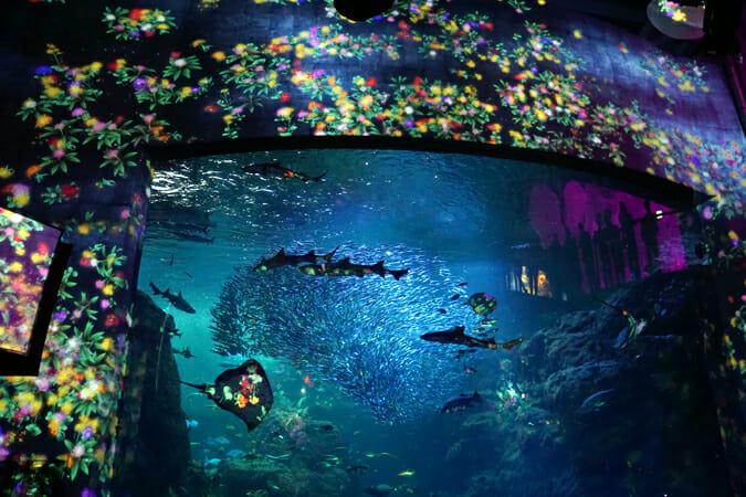 夜の水族館を彩るデジタルアート、「えのすい×チームラボ ナイトワンダーアクアリウム 2015」