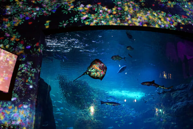 「花と魚- 相模湾大水槽」