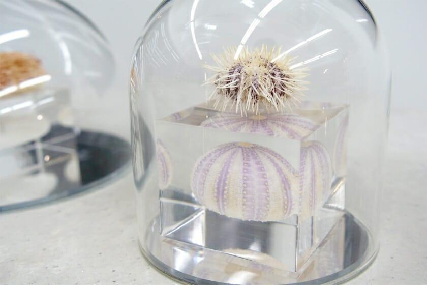 食べるだけじゃない、ウニの新しい魅力に触れる『自然の造形美展2「ウニのない人生なんて」』