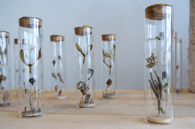小さな森 / ガラス管の中に小さなドライフラワー閉じ込められた作品