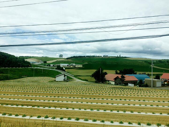 滝澤ベニヤの単板工場から合板工場へ移動の途中、丘で有名な美瑛を通過しました