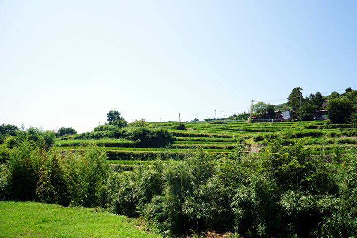 「日本棚田百選」にも選ばれている中山千枚田。魅力的な夏の風景