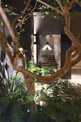 3メートルもある中庭のサルスベリ(撮影:アック東京)
