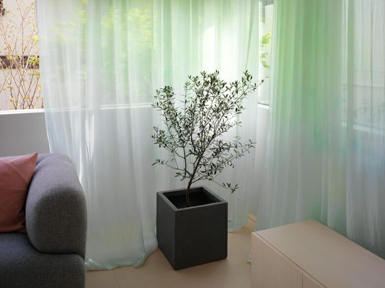 練馬ハウスのカーテン (3)