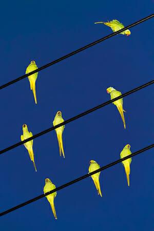 Colors / Tokyo Parrots