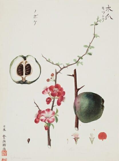 川原慶賀の植物図譜 | デザイン・アートの展覧会 & イベント情報 | JDN