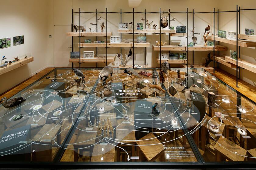 展示室4「ふじのくにの大地」