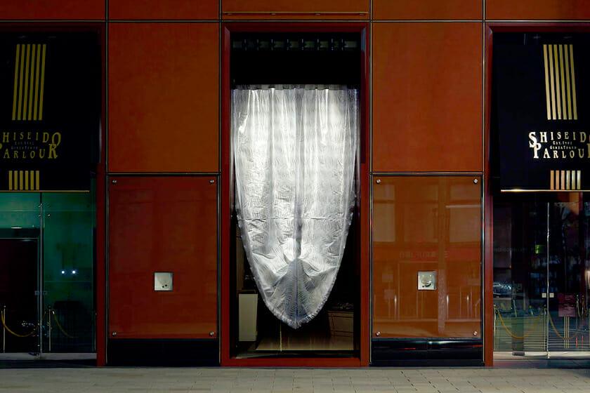 光のカーテン (1)