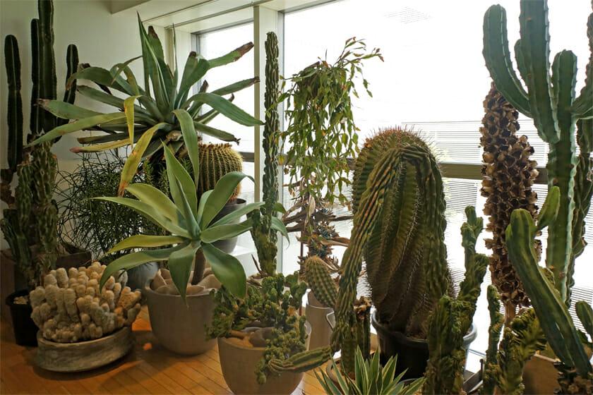 広島の植物店・叢-Qusamuraとの出会いで、多肉植物の魅力を知ったそうです