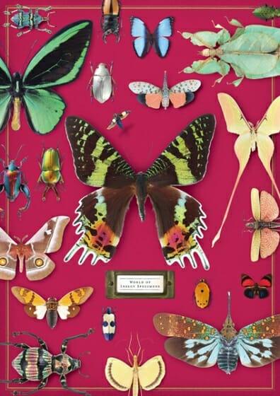 密やかな部屋-きらめく昆虫標本-