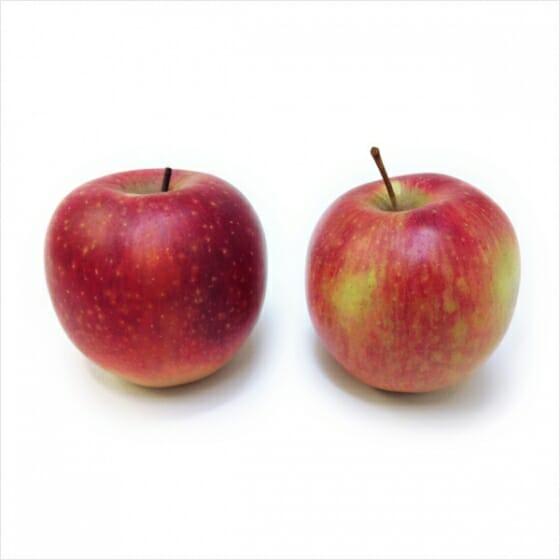 雨宮庸介「Apple(制作中)」木材に油彩、実物大