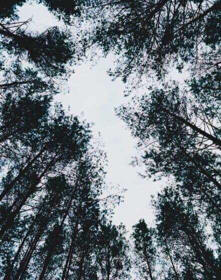 津田直 エリナスの森
