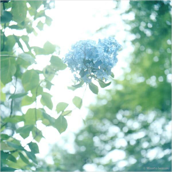 岩崎美里写真展「あじさいと夏の日」