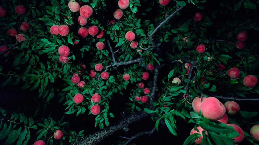 やなぎみわ《女神と男神が桃の木の下で別れる:川中島》(部分)2016年作家蔵