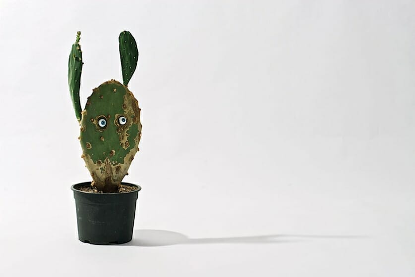 見える自然/見えない自然 ロイス・ワインバーガー展