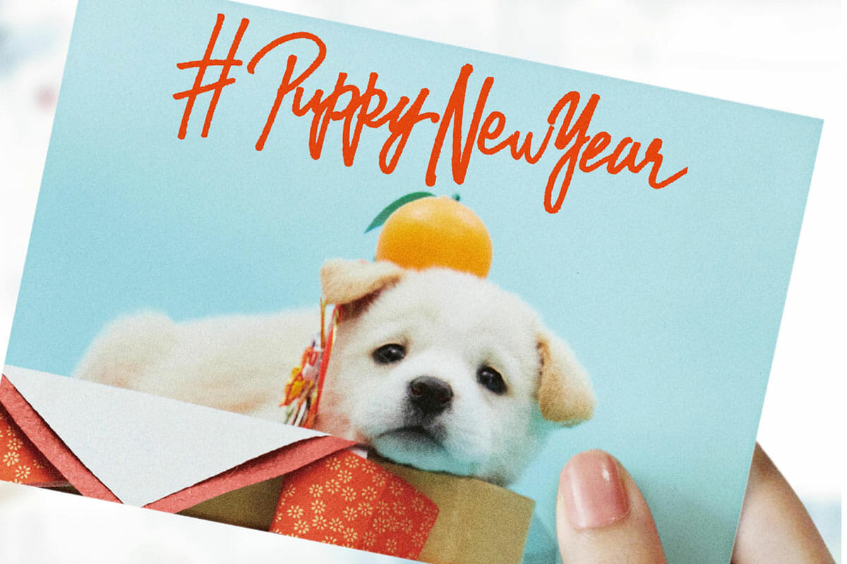 #PUPPY NEW YEAR
