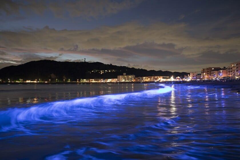 NightWave 光の波プロジェクト