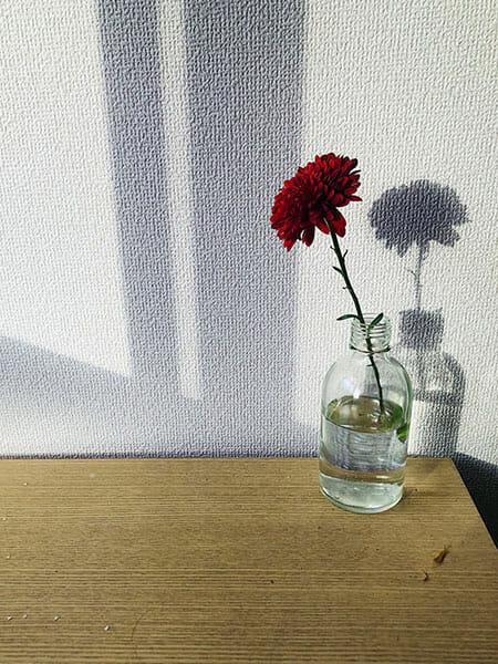 日比谷花壇のサブスクリプションサービス・ハナノヒ