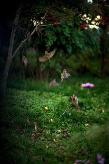 センス・オブ・ワンダー もうひとつの庭へ