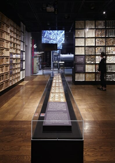 珠玉の昆虫標本−江戸から平成の昆虫研究を支えた東京大学秘蔵コレクション– (4)