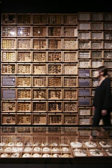 珠玉の昆虫標本−江戸から平成の昆虫研究を支えた東京大学秘蔵コレクション– (3)