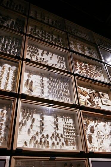 珠玉の昆虫標本−江戸から平成の昆虫研究を支えた東京大学秘蔵コレクション– (2)