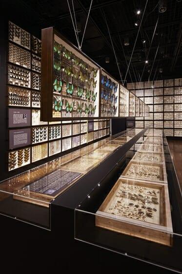 珠玉の昆虫標本−江戸から平成の昆虫研究を支えた東京大学秘蔵コレクション– (5)