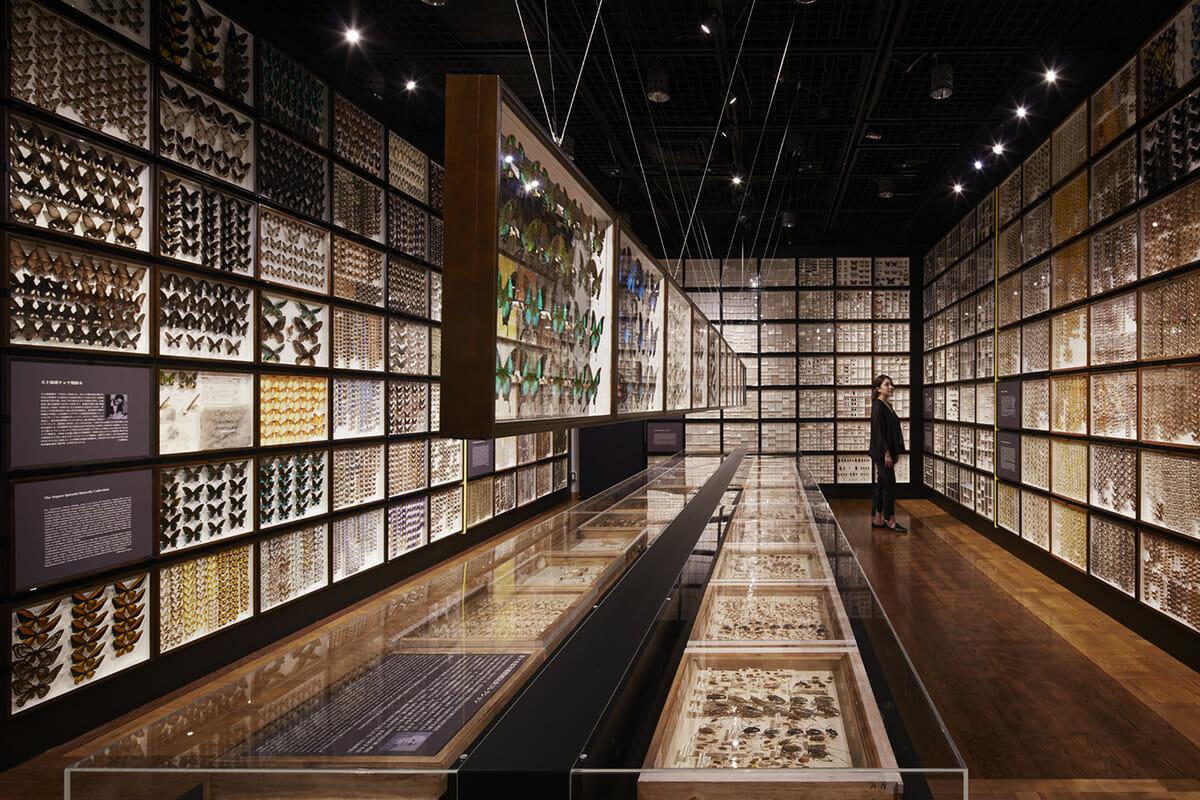珠玉の昆虫標本−江戸から平成の昆虫研究を支えた東京大学秘蔵コレクション–