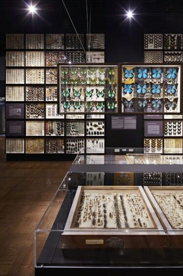 珠玉の昆虫標本−江戸から平成の昆虫研究を支えた東京大学秘蔵コレクション– (6)