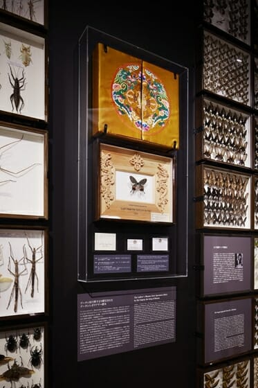 珠玉の昆虫標本−江戸から平成の昆虫研究を支えた東京大学秘蔵コレクション– (7)
