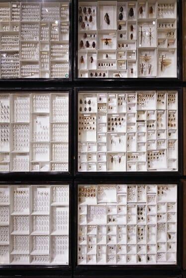 珠玉の昆虫標本−江戸から平成の昆虫研究を支えた東京大学秘蔵コレクション– (8)