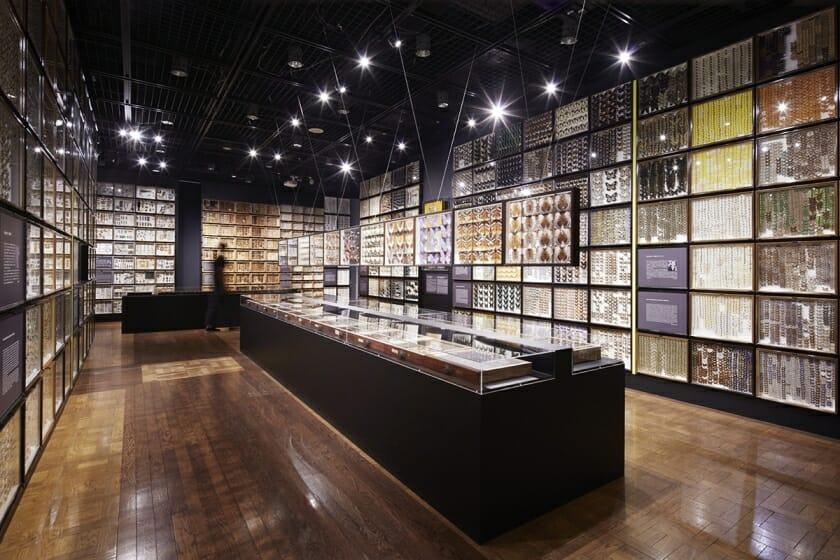 珠玉の昆虫標本−江戸から平成の昆虫研究を支えた東京大学秘蔵コレクション– (1)