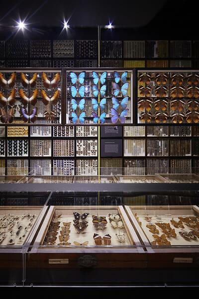珠玉の昆虫標本