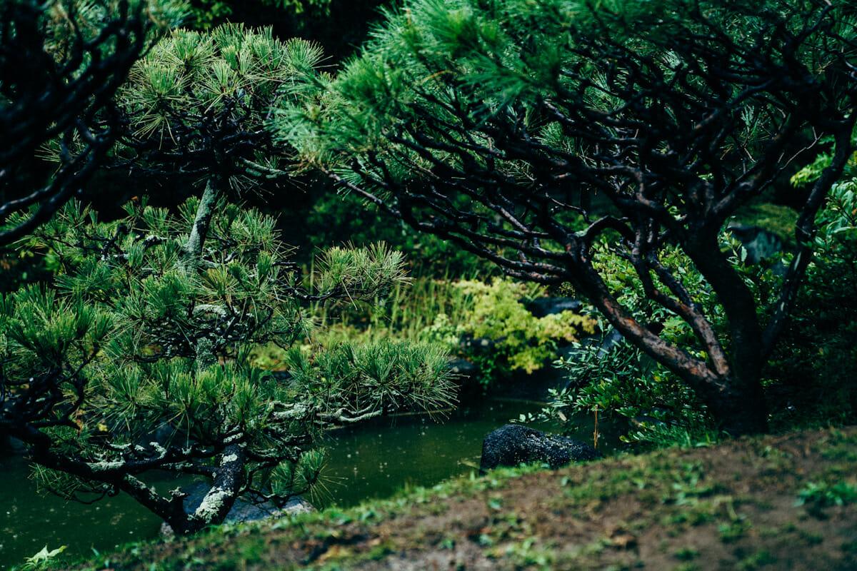 舞台となる日本庭園「見浜園」